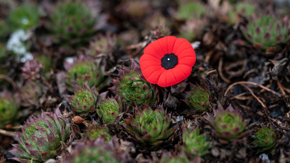 A poppy is pinned to the ground among flowers at the foot of a grave at the National Military Cemetery at Beechwood Cemetery in Ottawa on the day before Remembrance Day, Sunday, Nov. 10, 2019. THE CANADIAN PRESS/Justin Tang
