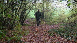 In this photo taken on Sunday, Nov. 10, 2019, Carlo Olivero walks in the walks the woods around Alba, Italy, with his 3-year-old dog Steel in search of prized white truffles. (AP Photo/Martino Masotto)