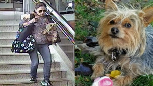 Toronto police are looking for a woman who allegedly stole a dog after its owner suffered a medical episode at Kipling subway station in October. (Supplied)