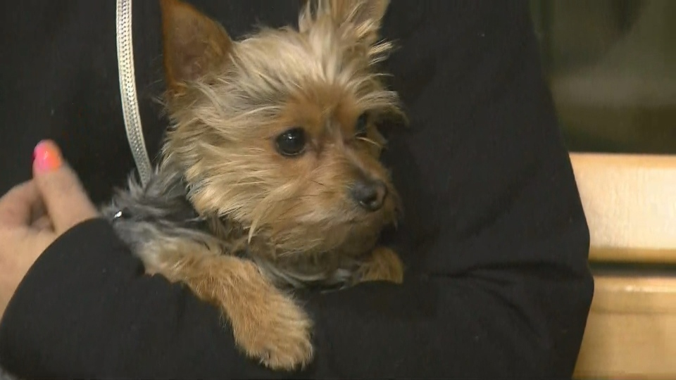Charlie, the dog that was taken from its owner while she was suffering a medical episode at a subway station in October, has been returned.