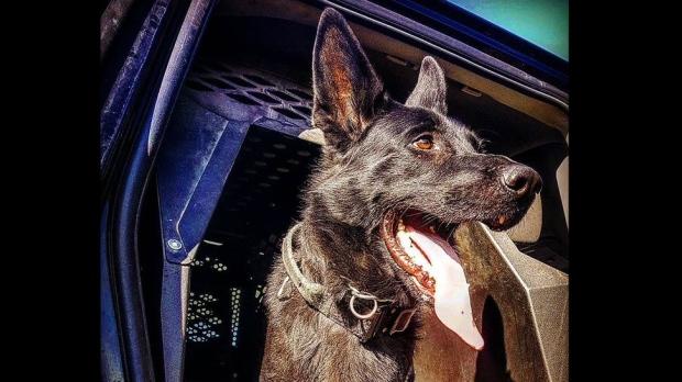 durham, police, dog,