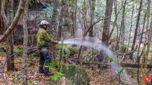 In this photo taken early Jan. 2020, and provided Thursday, Jan. 16, 2020, by the New South Wales National Parks and Wildlife Service, NSW National Parks and Wildlife Service personnel use fire hoses to dampen the forest floor near Wollemi pine trees in the Wollemi National Park, New South Wales, Australia. Specialist firefighters have saved the world's last remaining wild stand of a prehistoric tree from wildfires that razed forests west of Sydney. (NSW National Parks and Wildfire Service via AP)