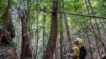 In this photo taken early Jan. 2020, and provided Thursday, Jan. 16, 2020, by the New South Wales National Parks and Wildlife Service, NSW National Parks and Wildlife Service personnel inspect Wollemi pine trees in the Wollemi National Park, New South Wales, Australia. (NSW National Parks and Wildfire Service via AP)