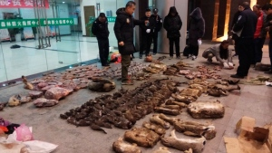 In this Jan. 9, 2020, photo provided by the Anti-Poaching Special Squad, police look at items seized from store suspected of trafficking wildlife in Guangde city in central China's Anhui Province.  (Anti-Poaching Special Squad via AP)