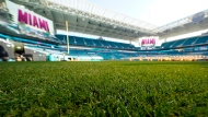 The grass inside Hard Rock Stadium is shown Tuesday, Jan. 28, 2020, in Miami Gardens, Fla., in preparation for the NFL Super Bowl 54 football game. (AP Photo/David J. Phillip)