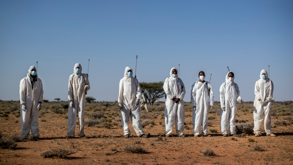 In this photo taken Tuesday, Feb. 4, 2020, pest-control sprayers demonstrate their work on the thorny bushes in the desert that is the breeding ground (AP Photo/Ben Curtis)