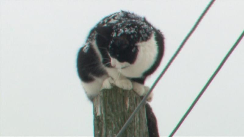cat, struck,