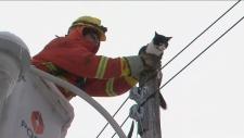 cat, rescue,