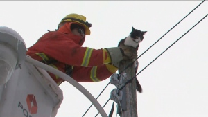 Crews rescued a cat from a Toronto hydro pole on Thursday morning.
