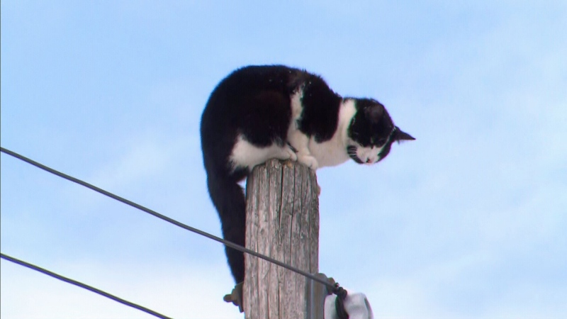 A small cat was rescued from a Toronto hydro pole on Feb. 27, 2020.