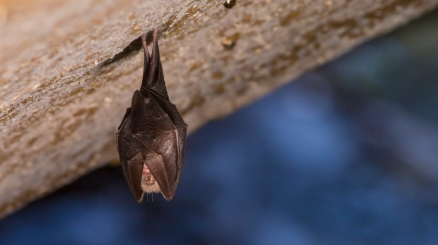 Bats test positive for rabies in the popular Toronto park