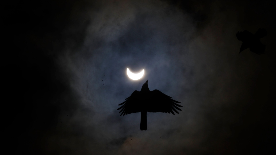 A crows flies as the sun forms a crescent during a solar eclipse in Kathmandu, Nepal, Sunday, June 21, 2020. (AP Photo/Niranjan Shrestha)