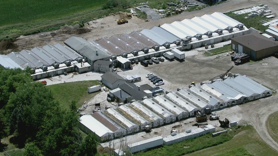 30 workers test positive for COVID-19 at Ravine Mushroom Farm in York Region.