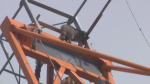 A daring raccoon is braving new heights after scaling a downtown crane Monday morning.