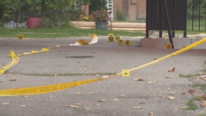 Toronto Police are searching for suspects after a 57-year-old man was shot to death while playing dominoes in North York on Thursday,