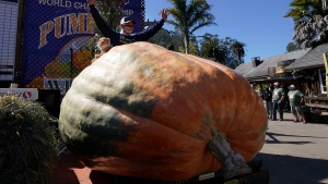 Travis Gienger, from Anoka, Minn., waves behind his pumpkin weighing in at 2350 pounds to win the Safeway World Championship Pumpkin Weigh-Off in Half Moon Bay, Calif., Monday, Oct. 12, 2020. (AP Photo/Jeff Chiu)