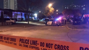 Police are investigating after several vehicles were found with bullet holes in the city's Jane and Finch neighbourhood.