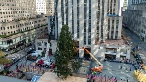 The 2020 Rockefeller Center Christmas tree, a 75-foot tall, 11-ton Norway Spruce from Oneonta, N.Y., is craned into place, Saturday, Nov. 14, 2020, in New York. The tree is presented to New York and the world by Tishman Speyer, the owners of Rockefeller Center. (Diane Bondareff/AP Images for Tishman Speyer)
