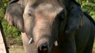 "Iconic singer and actress Cher is in Pakistan to celebrate the departure of Kaavan, dubbed the ""world's loneliest elephant,"" who will soon leave a Pakistani zoo for better conditions after years of lobbying by animal rights groups and activists."