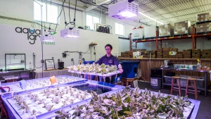 Aquaponics farm supervisor Colin Cotton poses with Romaine lettuce at the AquaGrow Farms inside The Mississauga Food Bank in Mississauga, Ont., Friday February 10, 2017. THE CANADIAN PRESS/Mark Blinch