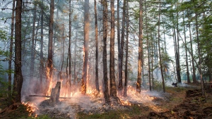 A forest fire, seen here in June 2020, burns in Russia's Sakha Republic. Parts of Siberia experienced temperatures in 2020 that were more than 6 degrees Celsius above normal averaged over the year. (Yevgeny Sofroneyev/TASS/Getty Images via CNN)