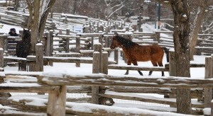 Horses are fed as snow falls at Riverdale Farm in Toronto on Feb. 19, 2021. (Chris Herhalt/CP24)