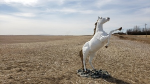 A damaged unicorn statue is shown in a field outside of Delia, Alta. in this undated handout photo. It's not often police can report that a unicorn has been found, but it was the truth Saturday when RCMP said a stolen, stainless-steel statue of the mythical beast had been located in a field not far from where he'd been taken. THE CANADIAN PRESS/HO, RCMP