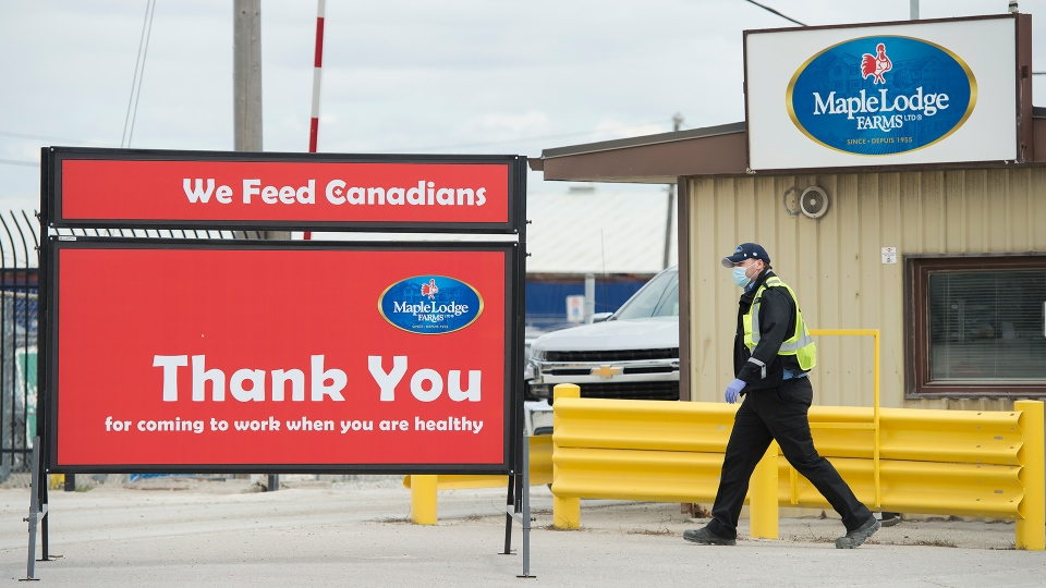 An employee wearing a mask works at the Maple Lodge Farms poultry processing plant during the COVID-19 pandemic in Brampton, Ont., on Friday, May 8, 2020. One employee has died and many others have tested positive for the coronavirus at the facility. THE CANADIAN PRESS/Nathan Denette