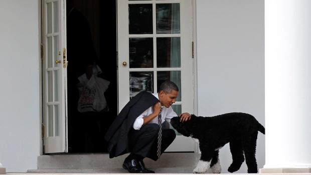 Obama's dog