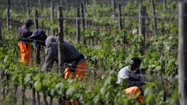 Italy vineyard