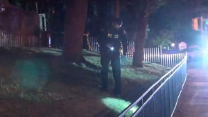 A TPS officer is seen searching some grass after a shooting in Flemingdon Park on June 23, 2021. (CP24)