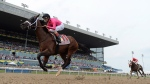 FILE - Wonder Gadot, with jockey John Velazquez aboard races towards victory during the Queen's Plate at Woodbine Racetrack in Toronto on Saturday, June 30, 2018. THE CANADIAN PRESS/Frank Gunn
