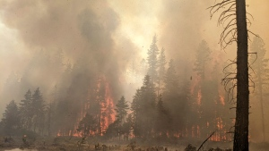 In this photo provided by the Bootleg Fire Incident Command, trees burn at the Bootleg Fire in southern Oregon, Sunday, July 25, 2021. Firefighters reported progress against the nation's largest wildfire, the Bootleg Fire in southern Oregon, containing 46% of the blaze that had consumed nearly 640 square miles (1,657 square kilometers). (Bootleg Fire Incident Command via AP)