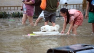 A girl helps her pet dog through flood waters after record downpours receded in Zhengzhou city in central China's Henan province Wednesday, July 21, 2021. Chinese authorities have announced a huge jump in the death toll from recent floods. The Henan province government said Monday, Aug. 2, 2021, that over 300 people died and at least 50 remain missing. (Chinatopix via AP)