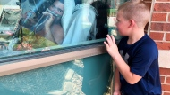 """Six-year-old Brody Barker waves to his father, Daryl, from outside his hospital room on Monday, July 26, 2021, in Osage Beach, Mo. Brody and his mother, Billie, have spent nearly three weeks camped outside Lake Regional Hospital's Intensive Care Unit as Barker recovers from COVID-19. """"I think that him being able to see us made him fight more,"""" she said. (AP Photo/Sarah Blake Morgan)"""