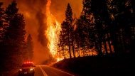 Flames leap from trees as the Dixie Fire jumps Highway 89 north of Greenville in Plumas County, Calif., on Tuesday, Aug. 3, 2021. Dry and windy conditions have led to increased fire activity as firefighters battle the blaze which ignited July 14. (AP Photo/Noah Berger)