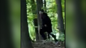 Police are looking for a suspect who allegedly assaulted a woman at a park in Brampton. (Peel Regional Police)