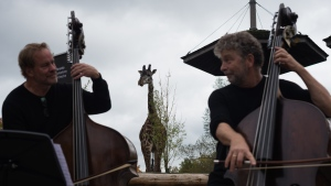 Paul Rogers, left, plays the music composed by his son that was inspired by the Masai giraffes, along side Tim Dawson, during a media unveiling announcing Zoophony, a joint partnership between the Toronto Zoo and the Toronto Symphony Orchestra, in Toronto, Tuesday, Oct. 5, 2021. THE CANADIAN PRESS/Tijana Martin