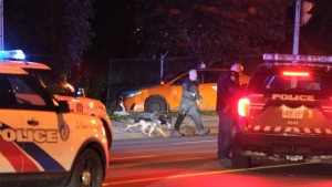 Toronto police are investigating a shooting in Scarborough that left a taxi driver in life-threatening condition. (Simon Sheehan/CP24)