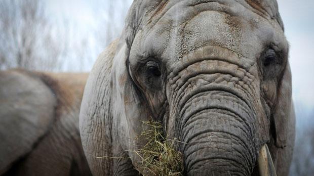 Toronto elephants