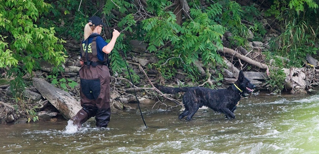 A police search dog searches the banks of the Credit River in Hewick Meadows Park in Mississauga, Ont., after police discovered a female severed head on Thursday August 16, 2012. (The Canadian Press/Aaron Vincent Elkaim)
