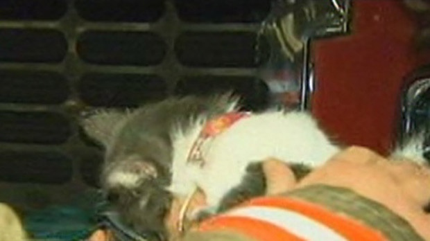 Firefighters administer oxygen to a cat rescued from a fire on George Street on Thursday, Oct. 4, 2012.