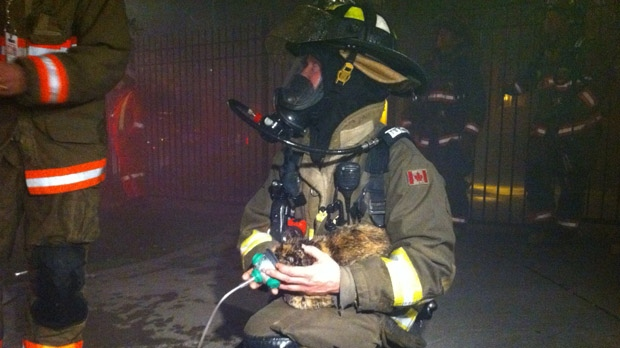 A firefighter administers oxygen to a cat that was rescued as crews battled a fire on George Street on Thursday, Oct. 4, 2012. (CP24/Tom Stefanac)