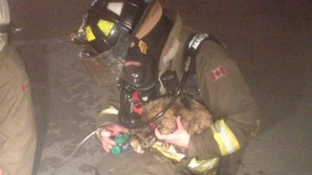 A firefighter holds a cat that was rescued from a fire on George Street on Thursday, Oct. 4, 2012. (CP24/Cam Woolley)