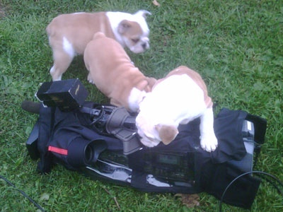 Three puppies pounce on a CP24 camera on Sunday, Oct. 3, 2010, after being found in an alleyway and reunited with their owners.